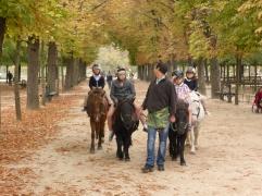 Ponies under the autumn trees